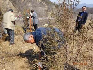 万里の長城付近での植林活動