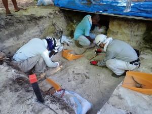 アンガウル島のサイパン日本人墓地での発掘調査